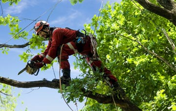 find trusted rated Richmond Upon Thames tree surgeons