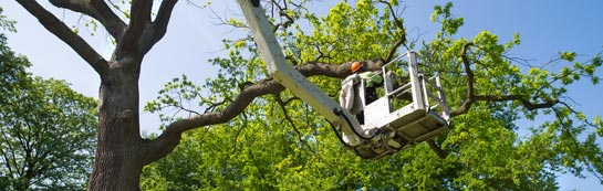 Richmond Upon Thames tree surgery services