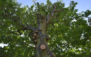 what is Richmond Upon Thames tree surgery?